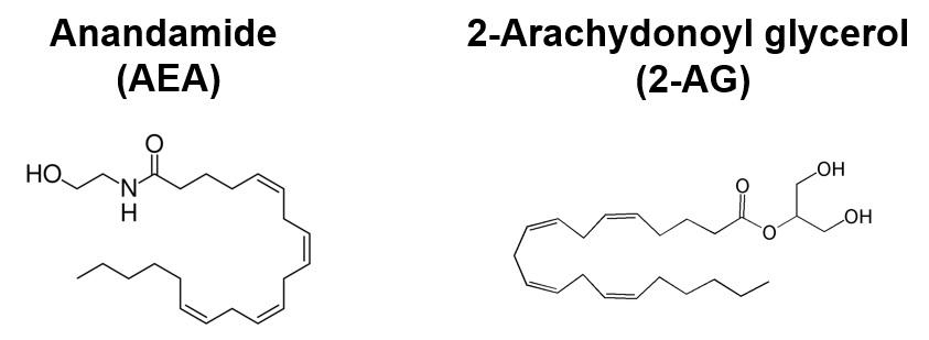 Anadamide&2-AG