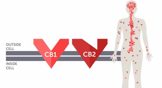 cb1_cb21.png